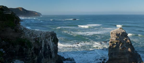 Gannet Colony, looking south to Piha, again thanks to John Doogan